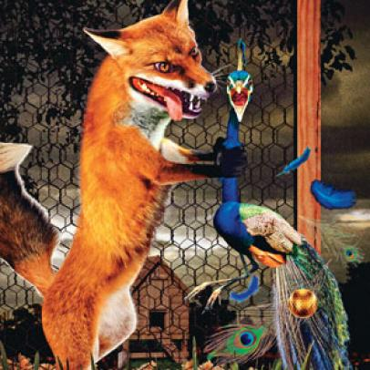 The Fox & The Peacock