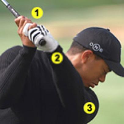 Tiger Tips: Up Close