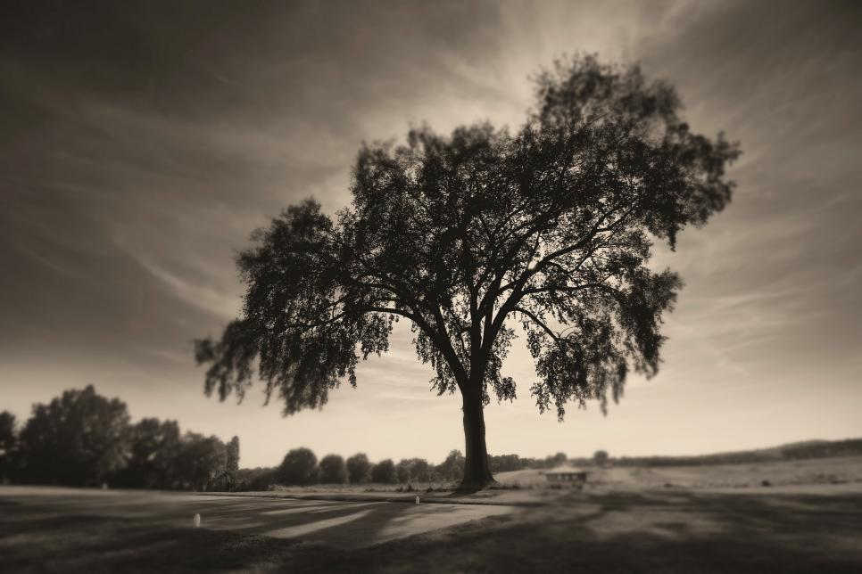 Oakmont-Country-Club-3th-hole-tree-staff.jpg