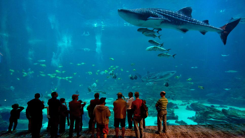 Atlanta-Georgia-Aquarium-Guests-Whale-Shark.jpg