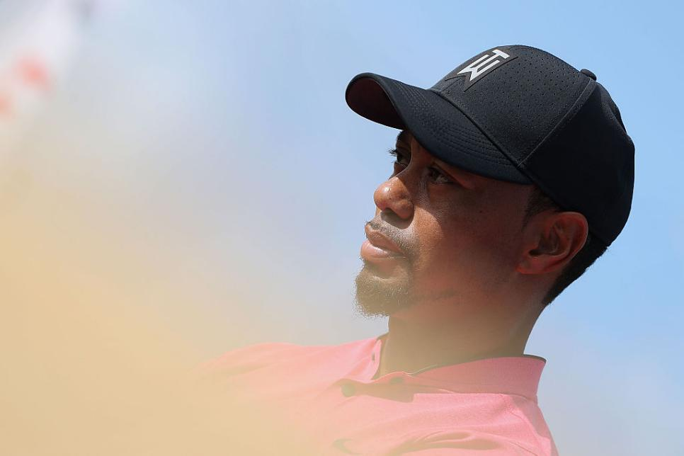 tiger.head.hero.16.jpg