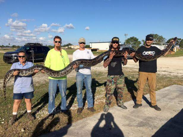 Inside the weird, wild world of state-sanctioned Florida python hunting