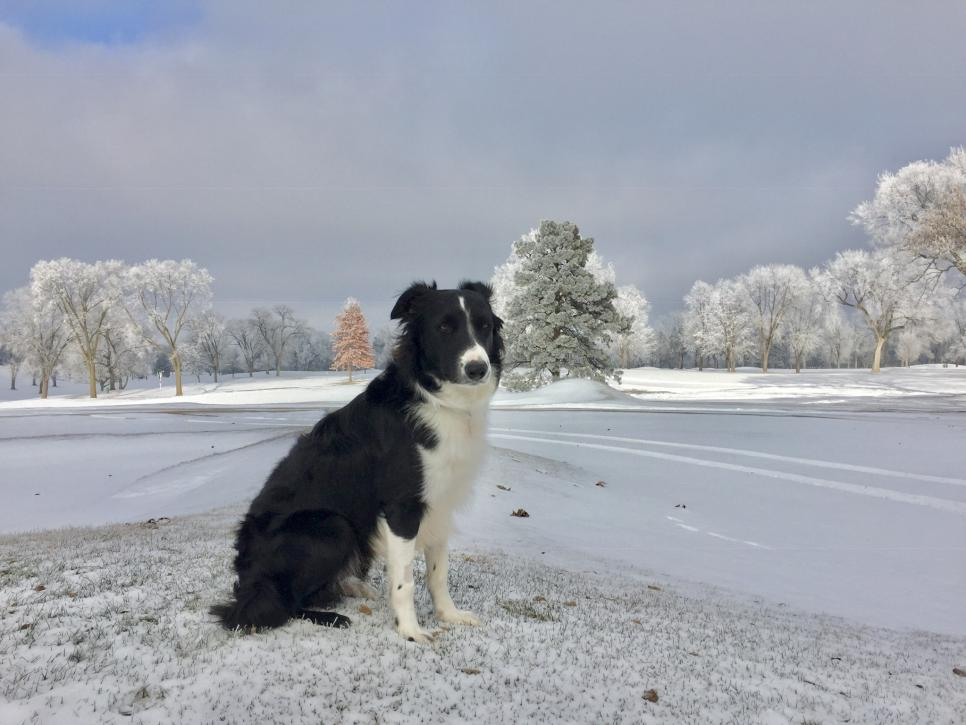 Minneapolis GC (Gear) - current dog.jpeg