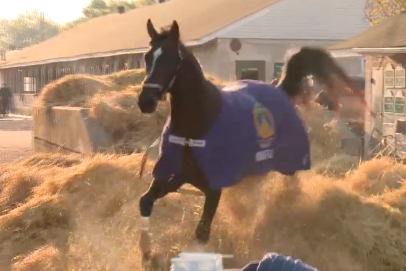 Think wide receivers are divas? Just wait until you see Kentucky Derby contender Midnight Bourbon refuse to take bath